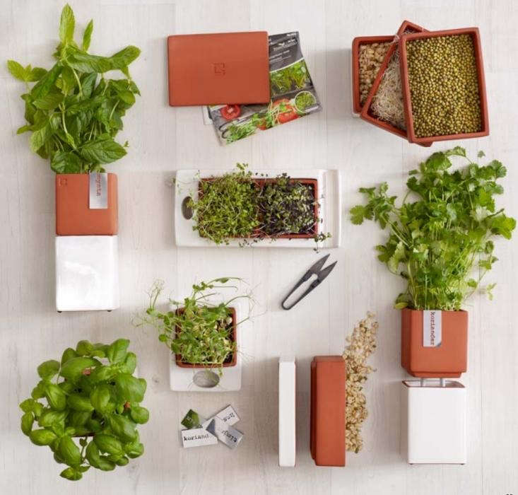 A Kitchen Garden You Can Sprout On A Countertop Gardenista