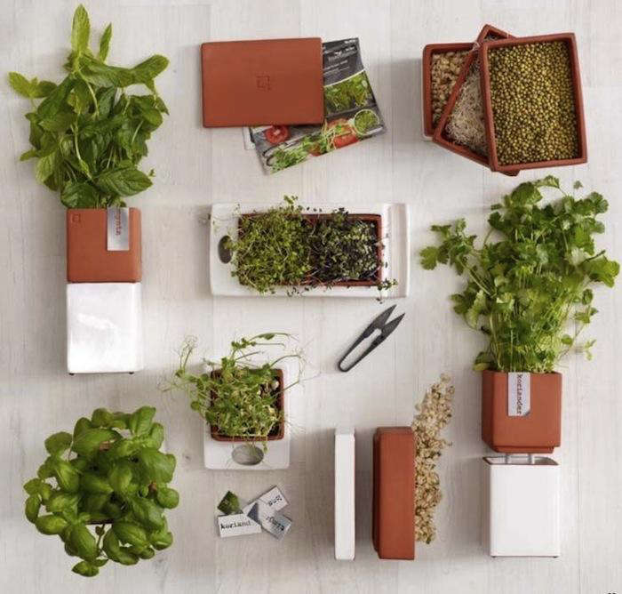cult1-big-herbs-in-row