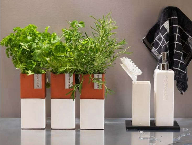 A kitchen garden you can sprout on a countertop gardenista Kitchen windowsill herb pots