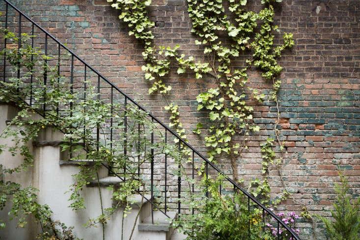 Gardening 101 Ivy Gardenista