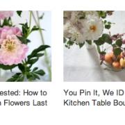 dahlias-read-more-gardenista