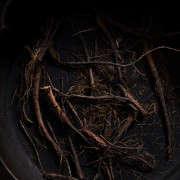 dandelion-roots-andrea-gentl