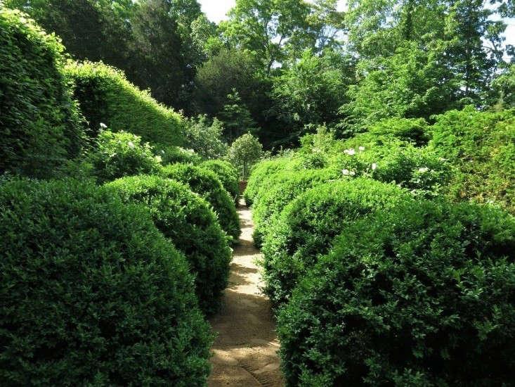 deborah-nevins-hedges-path-gardenista
