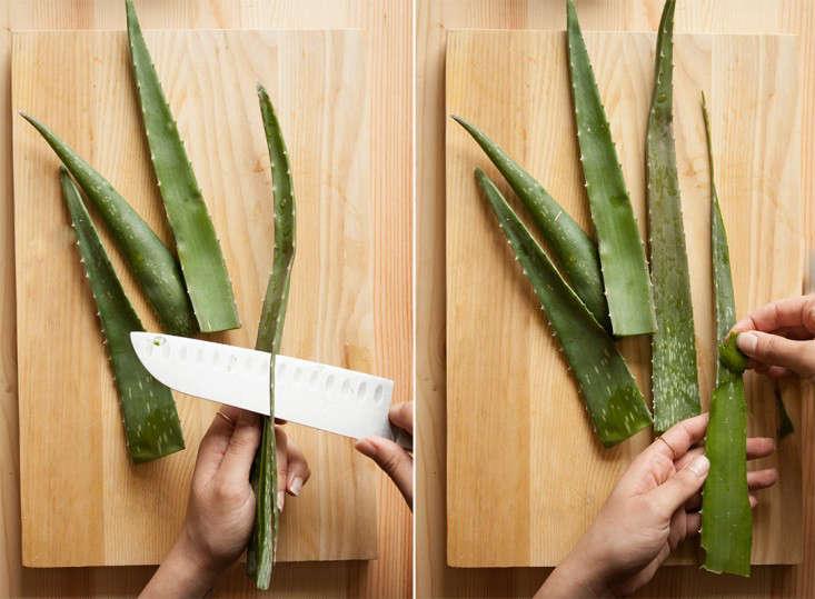 diy-aloe-vera-cutting-thorns-and-peeling-skin-gardenista
