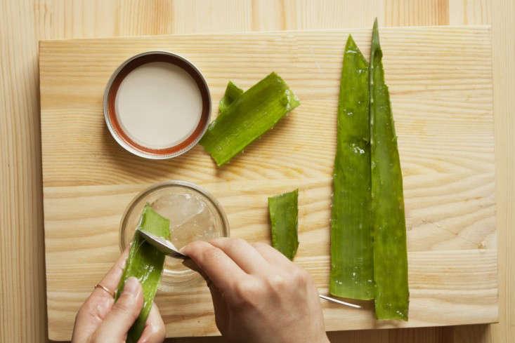 diy-aloe-vera-scooping-gel-gardenista