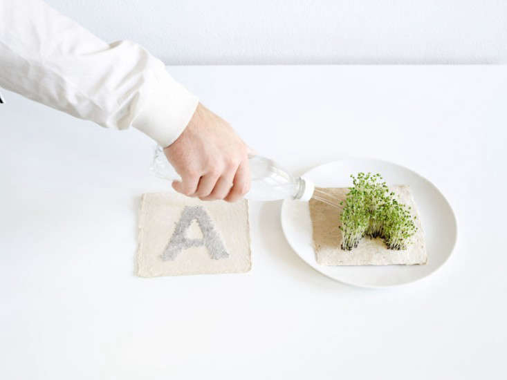 diy-heart-shape-microgreens-sprouts-leafling-grow-paper-3-gardenista