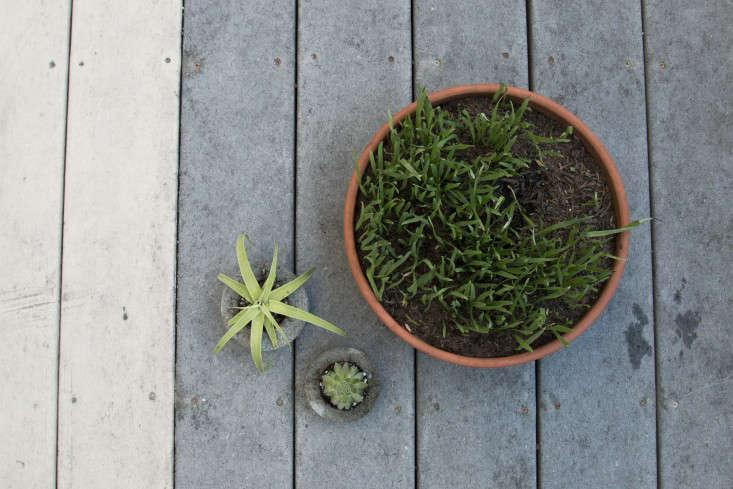 diy-mini-concrete-planter-budget-gardenista