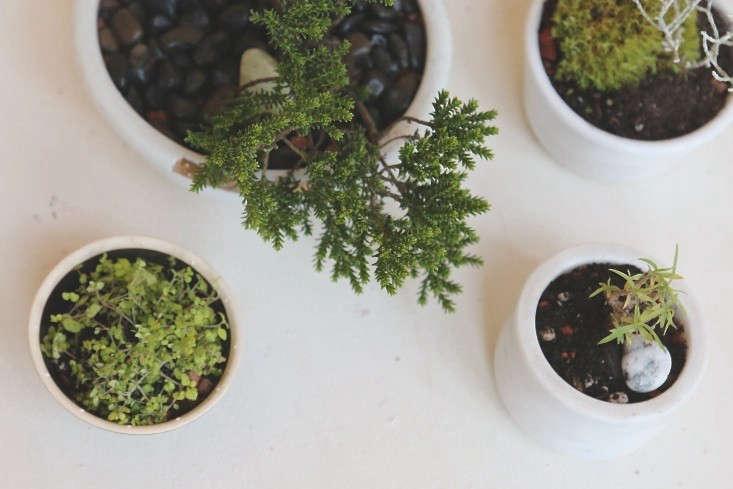 Diy No Fuss Bonsai For Beginners Gardenista