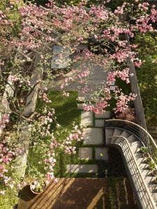 dogwood-jenna-lyons-brooklyn-gardenista.