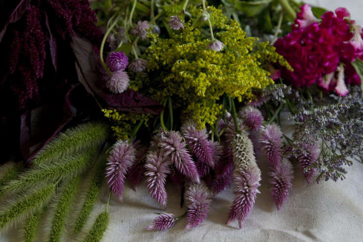 dried-flowers-erin-boyle-gardenista-1
