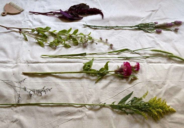 dried-flowers-erin-boyle-gardenista-2