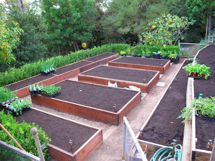 Hardscaping 101: Drip Irrigation | Gardenista: Sourcebook for ... - garden irrigation systems design