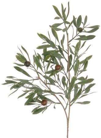 earth-flora-olive-branch-Gardenista
