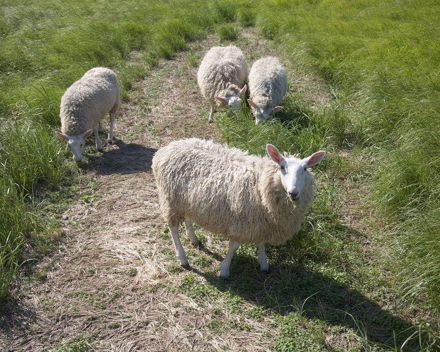 elizabeth-eakins-sheep-studio-khanna-schultz-gardenista-11