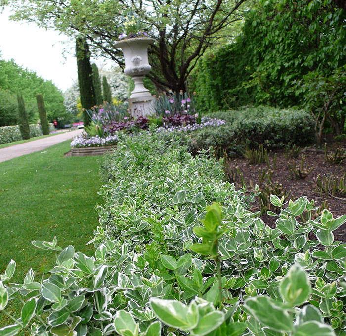 euonymus-gardenista