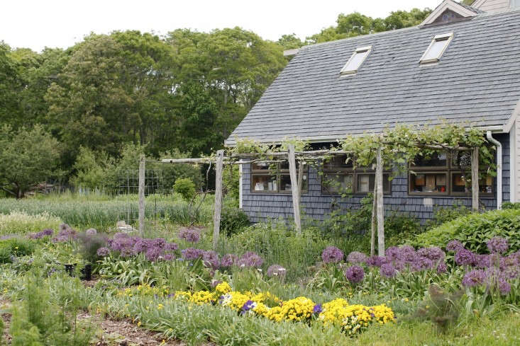 "Eva's Garden in Dartmouth, MA grows more than 200 kinds of uncommon herbs, greens, and edible ""weeds"" that are highly coveted by Boston's best chefs. Photograph by Christine Chitnis for Gardenista, from Boston's Best-Kept Secret: Eva's Organic Garden."