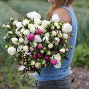 evas-garden-peony-harvest-christine-chitnis-gardenista