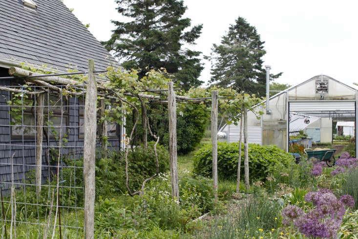 evas-garden-trellis-greenhouse-christine-chitnis-gardenista