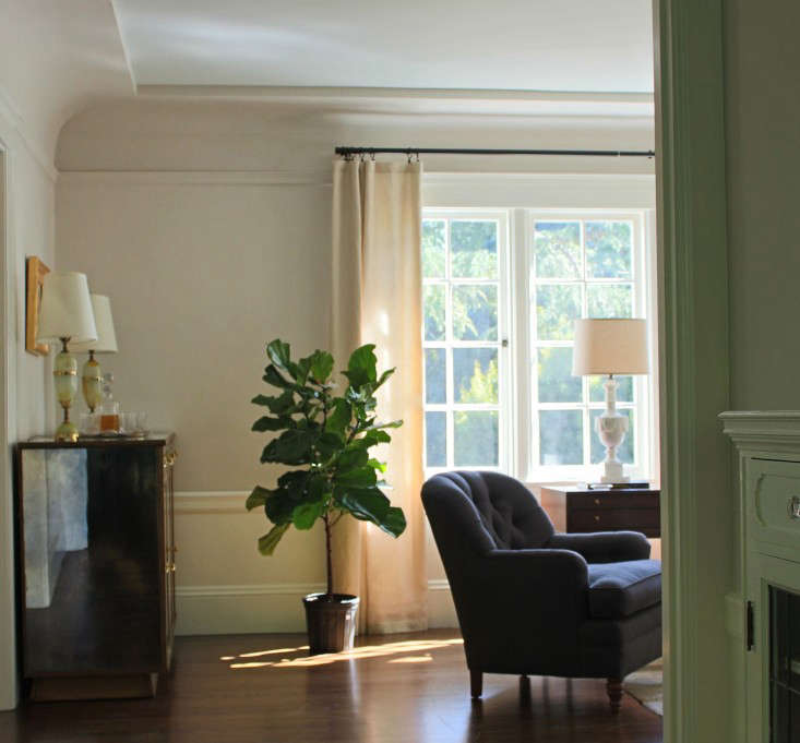fiddle leaf fig tree sunny living room