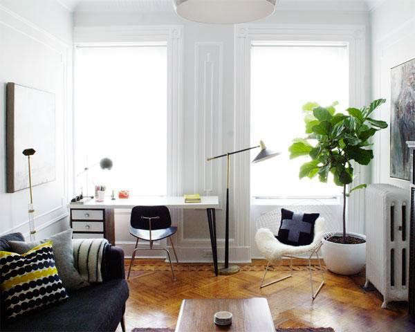 fiddle leaf fig tree fiddle leaf fig in manhattan