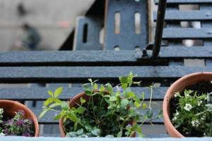 Fire Escape Garden by Erin Boyle ; Gardenista