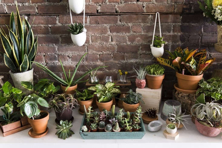 floor_plants_spina_cafe_nicole_franzen_gardenista