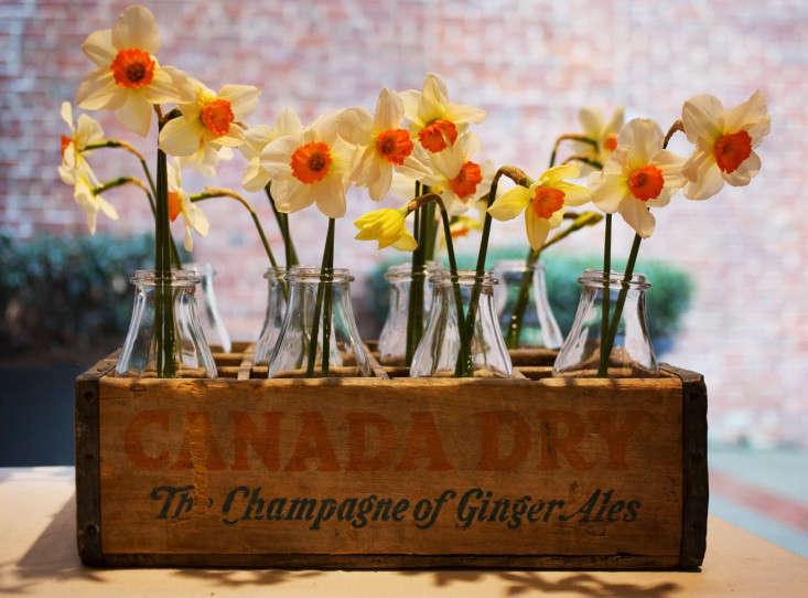 flora-cultural-daffodils-liesa-johannssen-gardenista