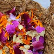 flower-confetti-kendra-geraniums-2