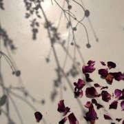 flower-confetti-ros-badger