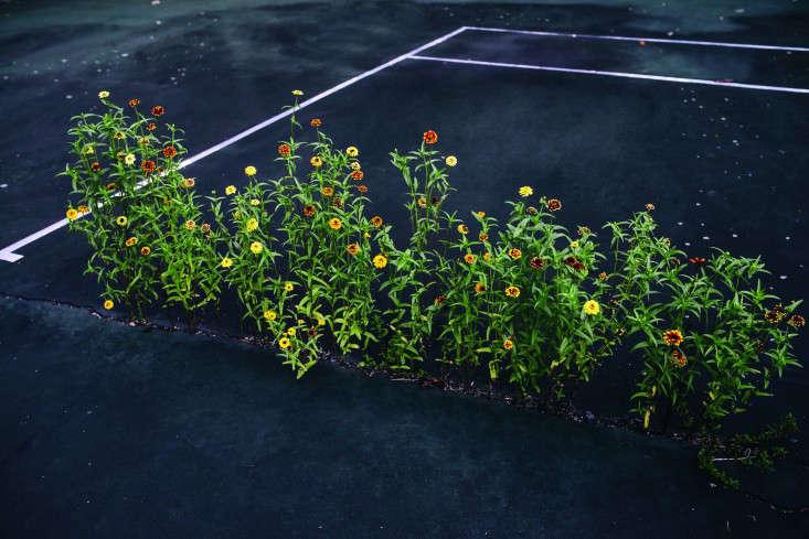 frances-palmer-tennis-court-kitchen-garden-martha-stewart-gardenista