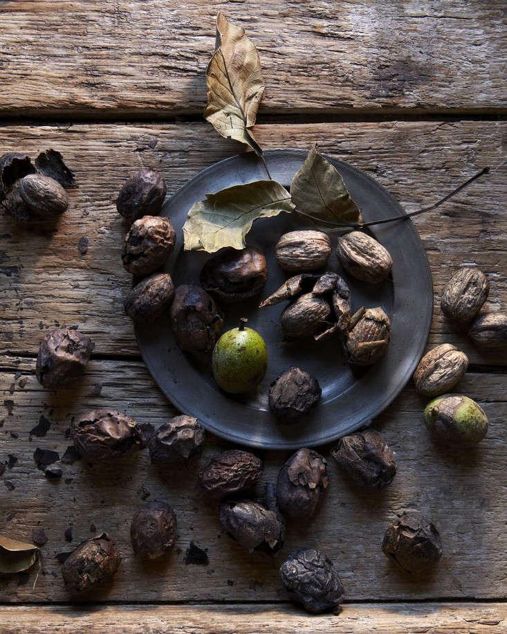 french-walnuts-andrea-gentl