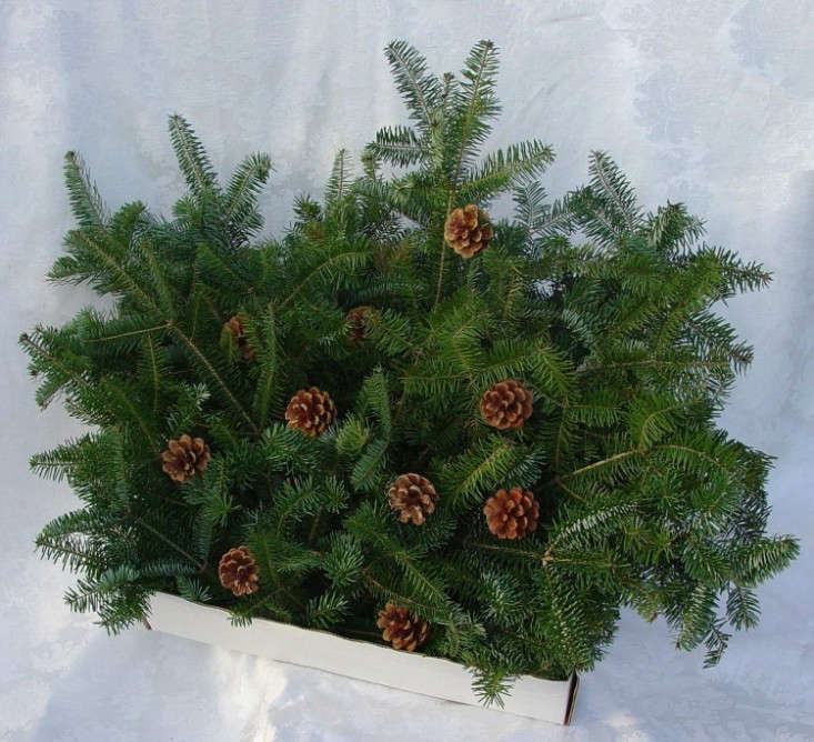 Evergreen Boughs Gardenista