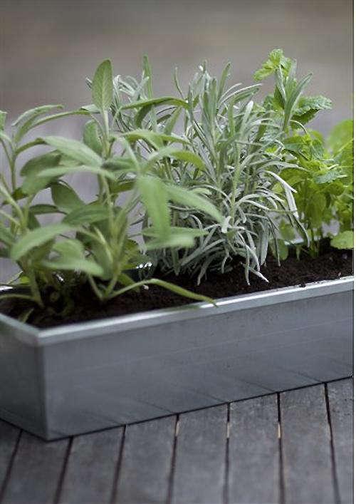 galvanised-pot-planter
