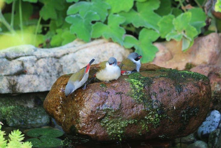 garden-ideas-south-africa-outdoor-dining-marie-viljoen-gardenista-birds1
