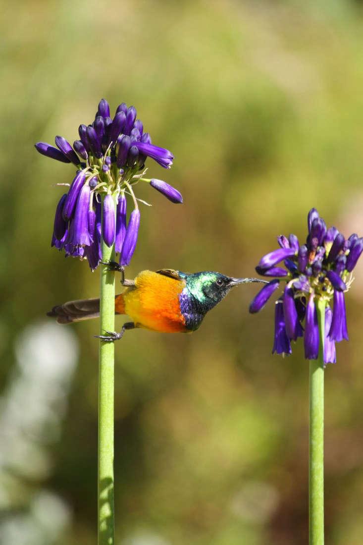 garden-ideas-south-africa-outdoor-dining-marie-viljoen-gardenista-birds2