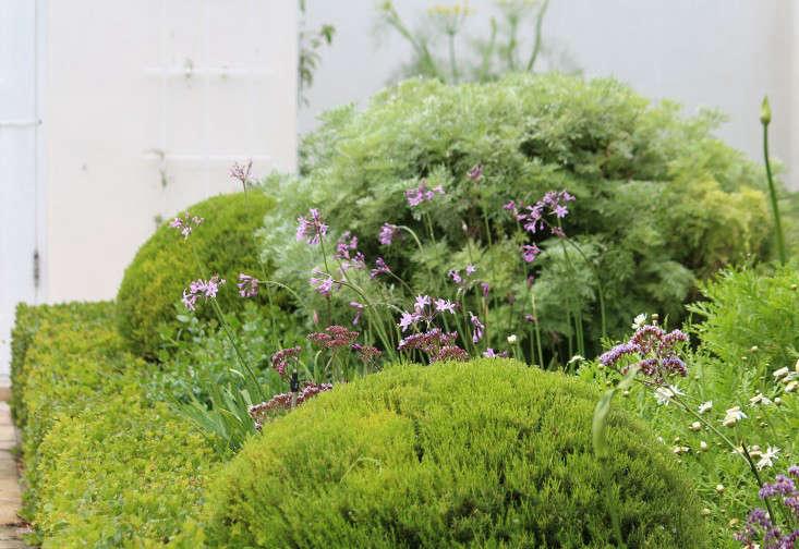 garden-ideas-south-africa-outdoor-dining-marie-viljoen-gardenista-fragrantfoliage2
