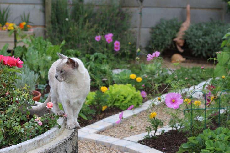 garden-ideas-south-africa-outdoor-dining-marie-viljoen-gardenista-furryfriends