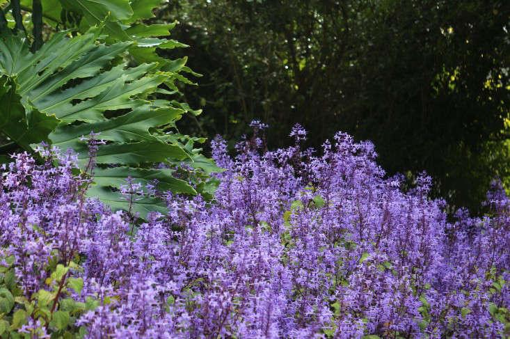 garden-ideas-south-africa-outdoor-dining-marie-viljoen-gardenista-plectranthus