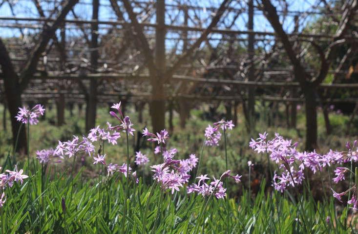 garden-ideas-south-africa-outdoor-dining-marie-viljoen-gardenista-societygarlic