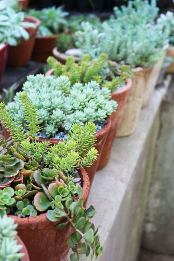 garden-ideas-south-africa-outdoor-dining-marie-viljoen-gardenista-succulentpots