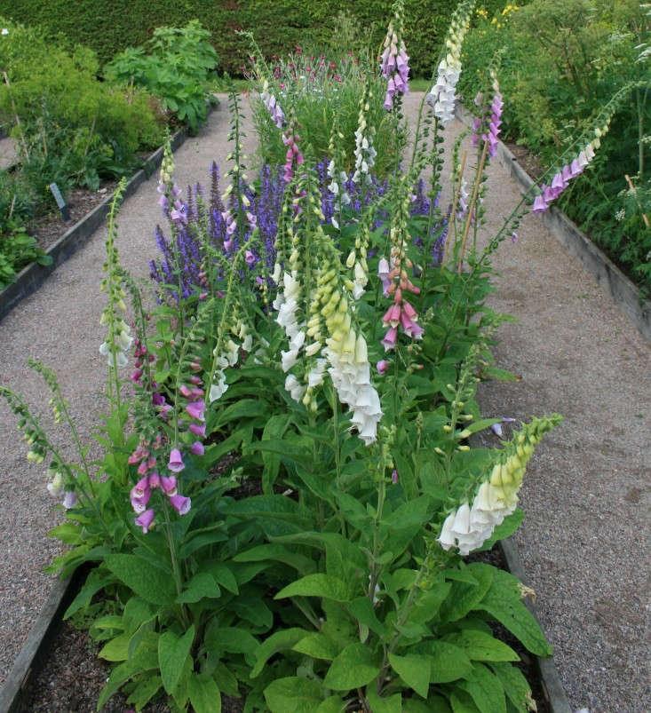 garden-ideas-to-steal-from-scandinavia-foxglove-gardenista