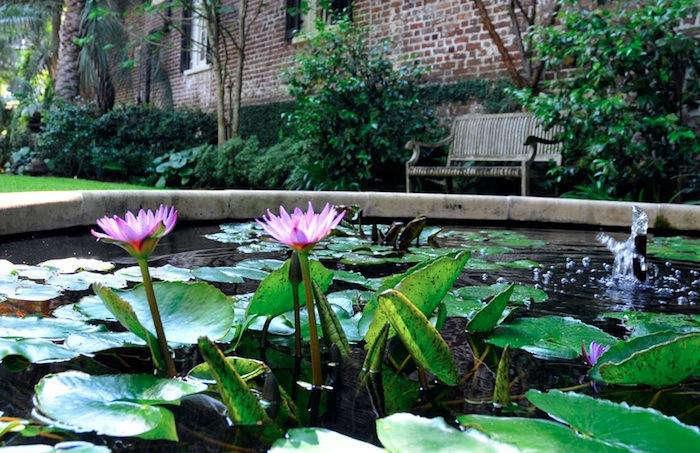 garden-pond-pink-lily-700