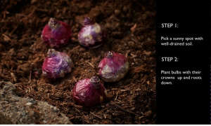 gardening 101 how to plant bulbs in clump l Gardenista