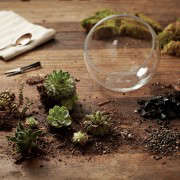 gardening 101 indoor terrarium how to 3, Gardenista