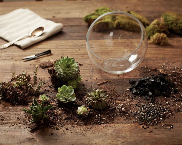 Gardening 101: How to Plant an Open Terrarium - Gardening 101: How To Plant An Open Terrarium - Gardenista