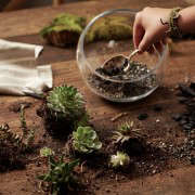 gardening 101 indoor terrarium how to 4 ; Gardenista