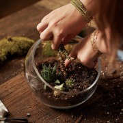 gardening 101 indoor terrarium how to 5 ; Gardenista