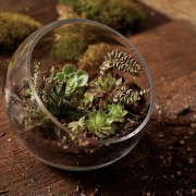 gardening 101 indoor terrarium how to 6 ; gardenista