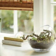 gardening 101 indoor terrarium how to 9 ; gardenista