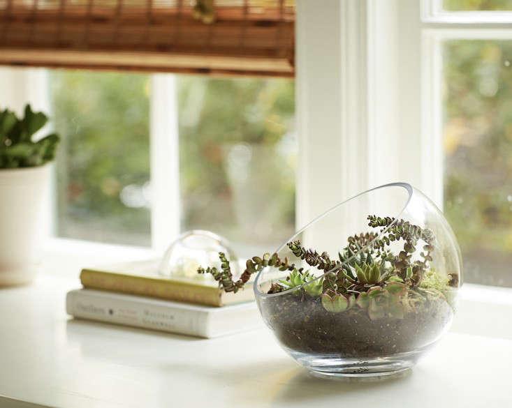 gardening 101 indoor terrarium how to 9 ; gardenista.jpg - Gardening 101: How To Plant An Open Terrarium - Gardenista